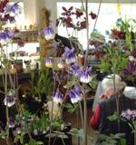 Suntrap Plant Sales