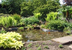 Suntrap Pond