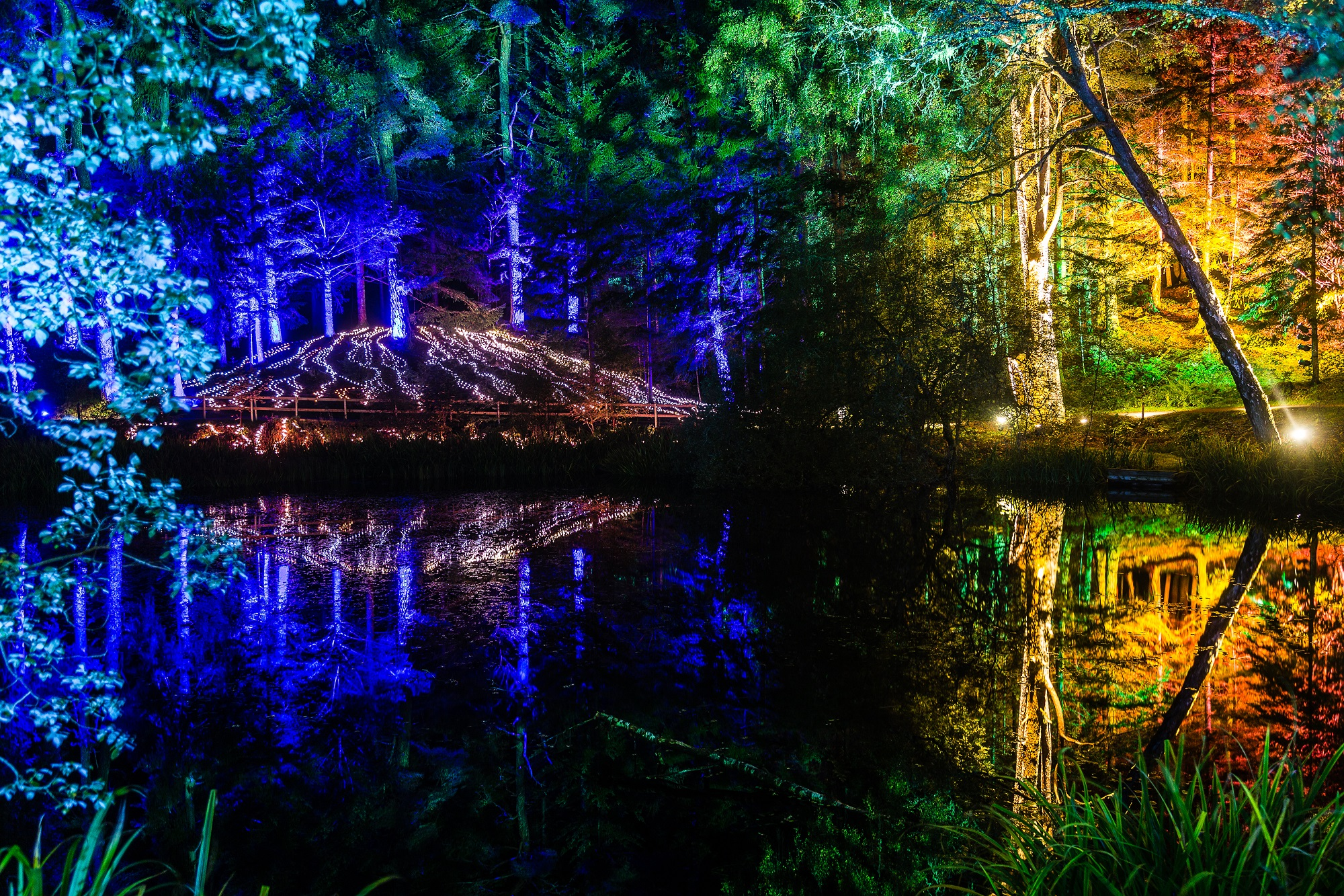 Enchanted Forest 2017 preview night