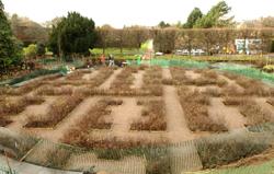 E layout in garden