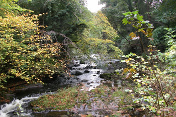 Autumn colours near Colinton