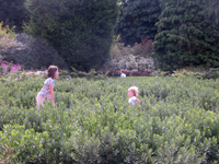 children playing in the bog myrtle